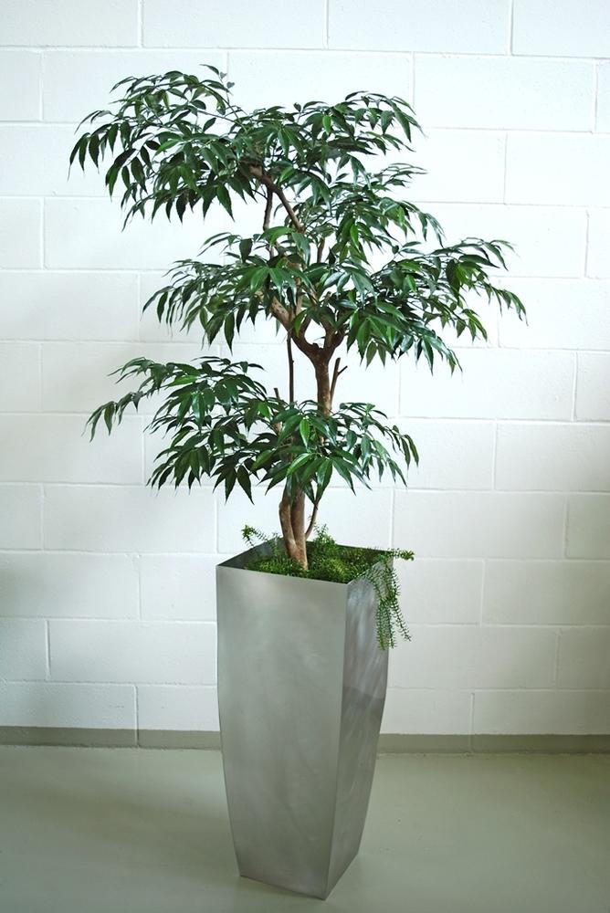 Myrsifolia Multistep 180 cm Green